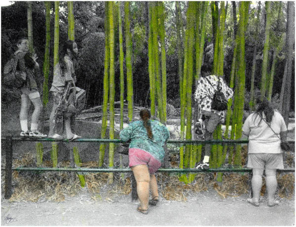 Photograph - At The Zoo - Who's Watching Who? by Wayne King