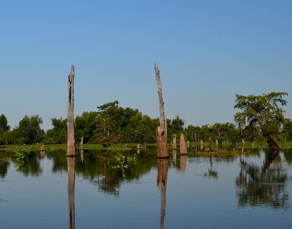 Photograph - Atchafalaya Basin 18 by Maggy Marsh