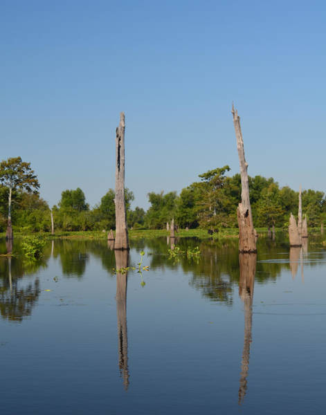 Photograph - Atchafalaya Basin 19 by Maggy Marsh