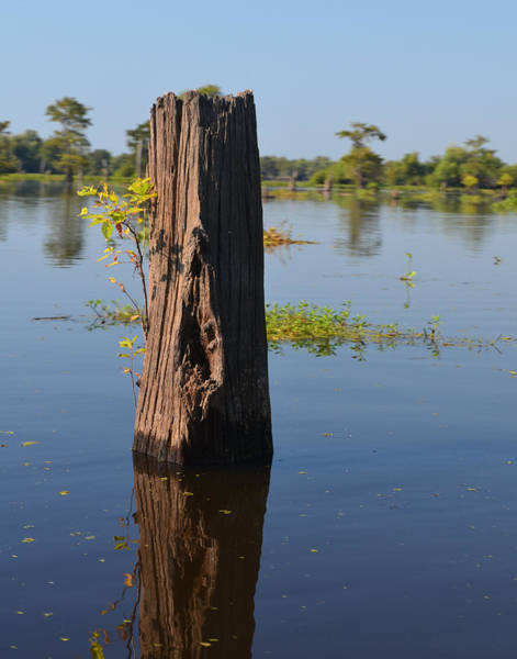 Photograph - Atchafalaya Basin 22 by Maggy Marsh