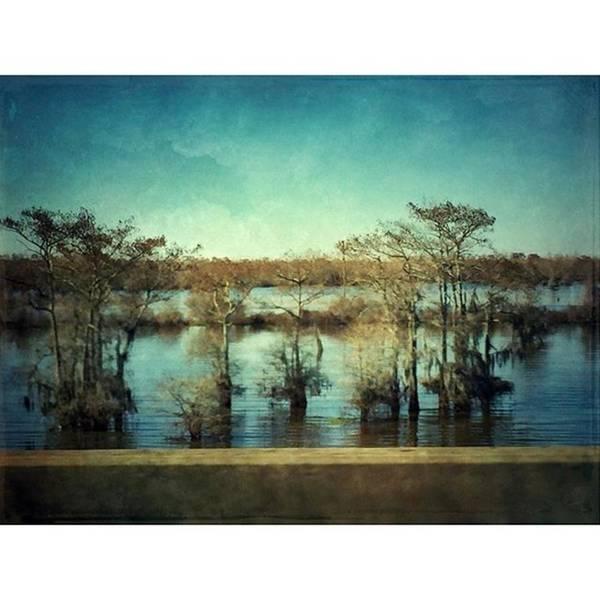 Wall Art - Photograph - Atchafalaya #louisiana  #swamp by Joan McCool