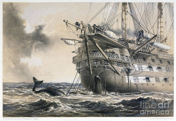 Photograph - Atlantic Cable, 1858 by Granger