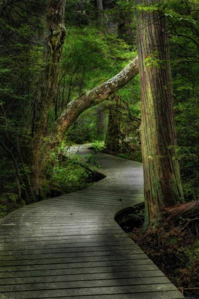 Photograph - Atlantic White Cedar by Bill Wakeley