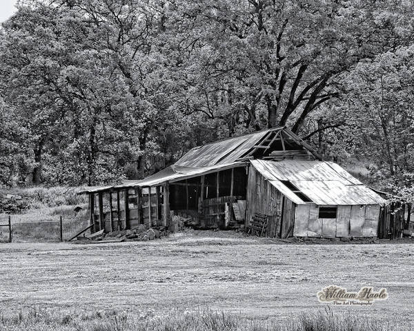 Photograph - Auburn Barn by William Havle