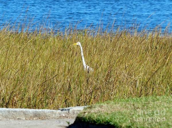 Photograph - Audubon Park Sighting by Rosanne Licciardi