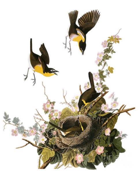 Photograph - Audubon: Yellow Chat, (1827-38) by Granger