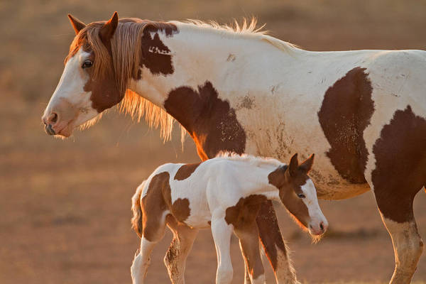 Painted Horses Photograph - August Foal by Sandy Sisti