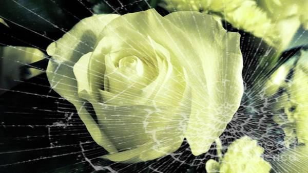 Photograph - Aunt Edna's Rose by Rachel Hannah