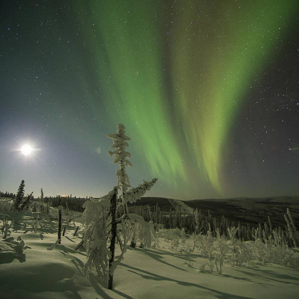 Photograph - Aurora In The Hoar Frost by Ian Johnson