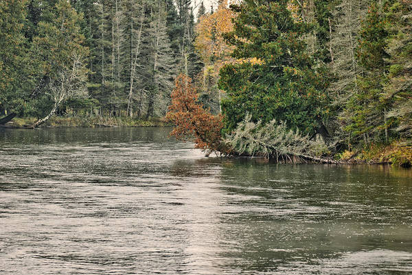 Birch River Photograph - Ausable River 9899 by Michael Peychich