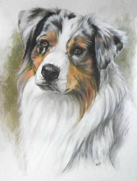 Mixed Media - Australian Shepherd In Watercolor by Barbara Keith
