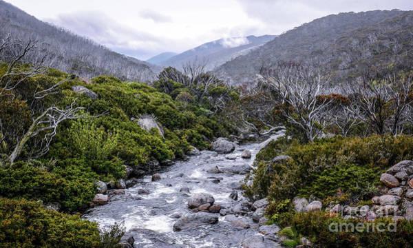 Photograph - Australian Alpine Scene by Lexa Harpell