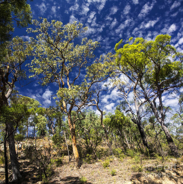 Wall Art - Photograph - Australian Bushland by Sheila Smart Fine Art Photography