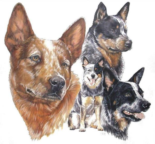 Mixed Media - Australian Cattle Dog by Barbara Keith