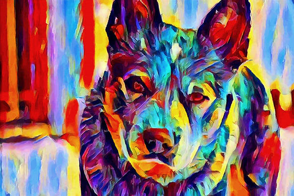 Wall Art - Painting - Australian Cattle Dog by Chris Butler