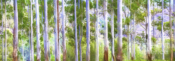 Wall Art - Photograph - Australian Gum Trees by Sheila Smart Fine Art Photography
