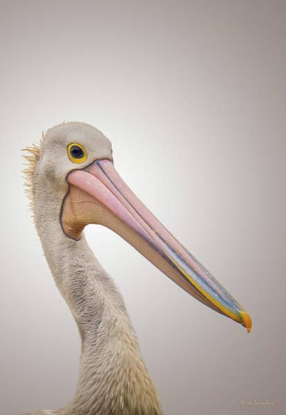 Australian Wildlife Wall Art - Photograph - Australian Pelican by Wim Lanclus