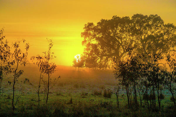 Photograph - Australian Sunrise by Max Neivandt