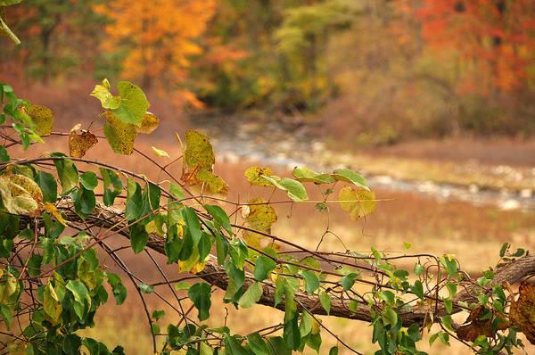 Photograph - Autmn Leaves 2 by Frank Mari