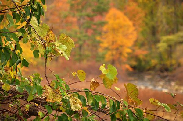 Photograph - Autmn Leaves 3 by Frank Mari