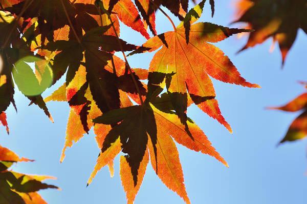 Photograph - Autmn Leaves by Frank Mari