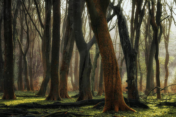Holland Wall Art - Photograph - Autumagic by Martin Podt