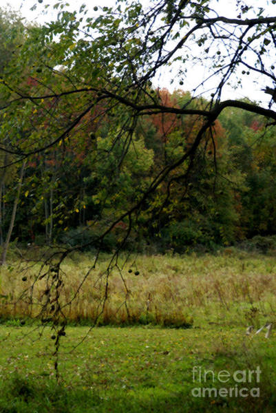 Photograph - Autumn - 1  by Linda Shafer
