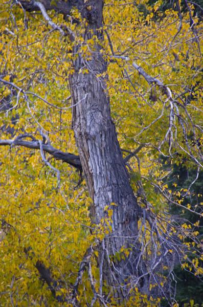 Photograph - Autumn 2 by Catherine Sobredo