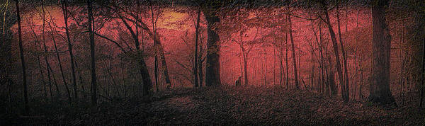 Wall Art - Photograph - Autumn 2015 Panorama In The Woods Pa 05 by Thomas Woolworth