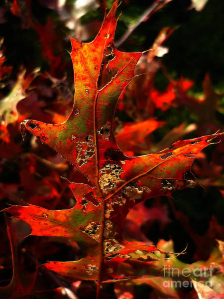 Photograph - Autumn 6 by Jeff Breiman