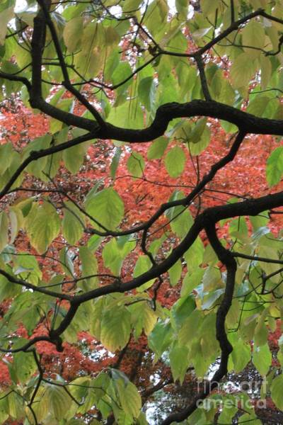 Photograph - Autumn 7 by Carol Groenen