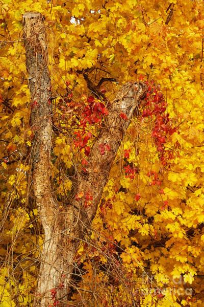 Photograph - Autumn 8 by Jeff Breiman