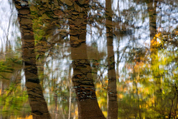Photograph - Autumn Abstract by Denise Bush