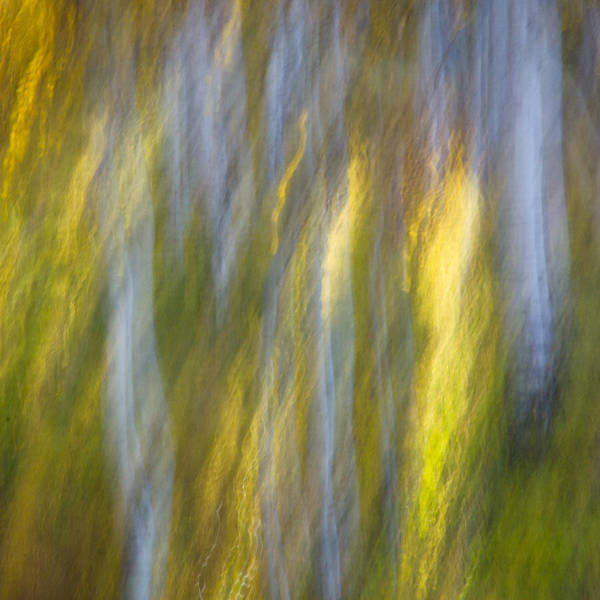 Photograph - Autumn Abstract by James Woody