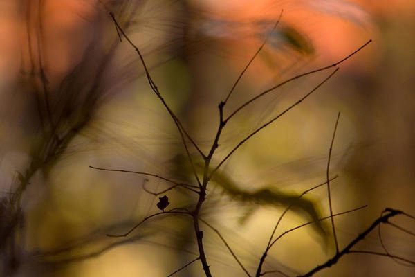 Photograph - Autumn Abstract by Jane Melgaard