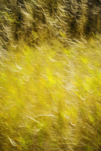 Photograph - Autumn Abstract by Marilyn Hunt