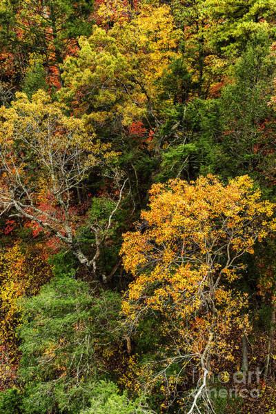 Photograph - Autumn Aerial Blue Ridge Parkway by Thomas R Fletcher
