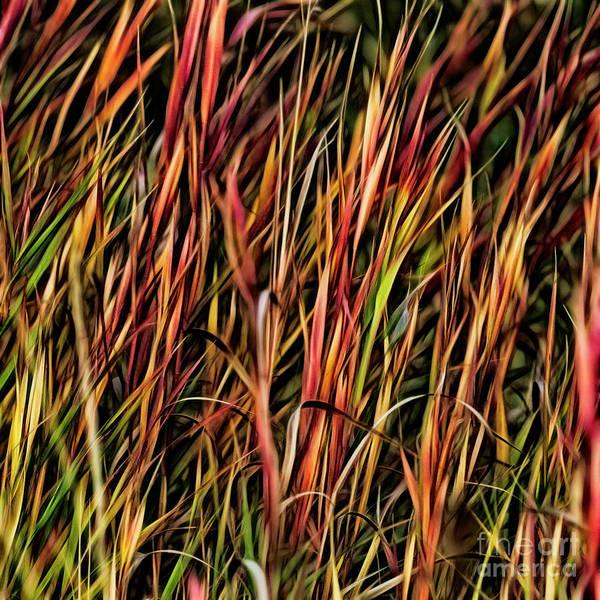 Photograph - Autumn Afire by Brad Allen Fine Art