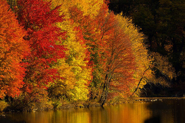 Wall Art - Photograph - Autumn Afternoon At The Cove by William Jobes