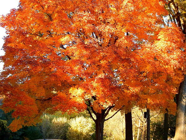Photograph - Autumn Afternoon Glory by Wild Thing