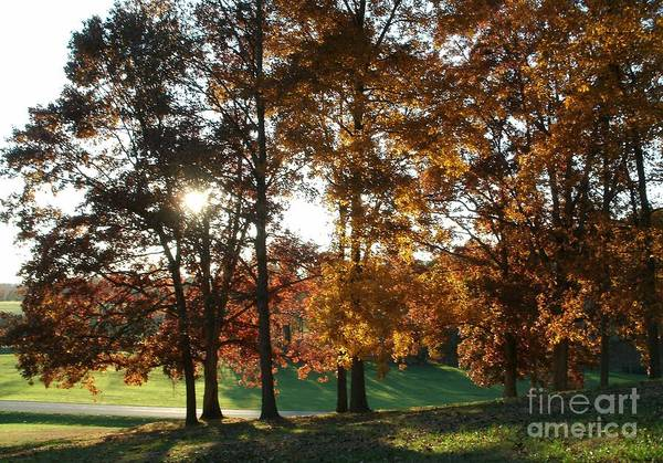 Photograph - Autumn Afternoon by Tammie J Jordan