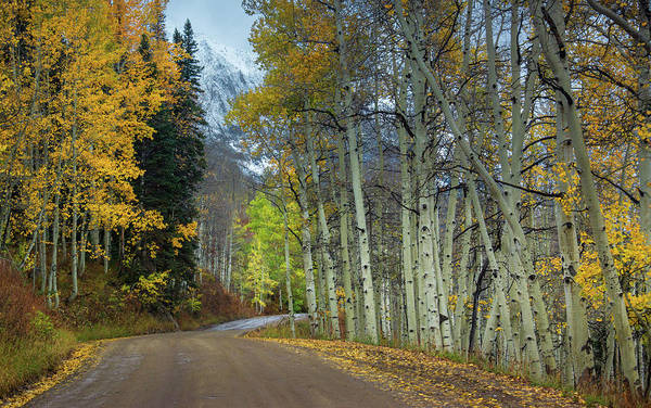Photograph - Autumn Along Gothic Road by John De Bord