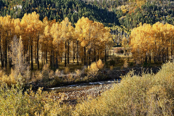 Photograph - Autumn Along The River IIi by Leda Robertson