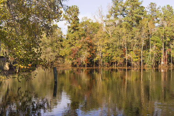 Photograph - Autumn Along The Waccamaw River In South Carolina by MM Anderson
