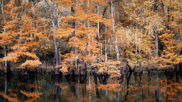 Photograph - Autumn Along The Waccamaw by Van Sutherland
