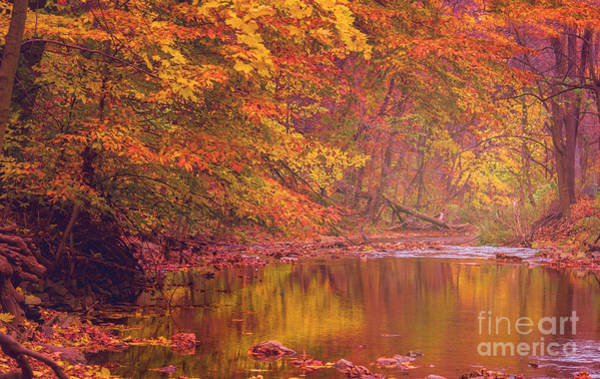 Photograph - Autumn And The Creek by Rima Biswas