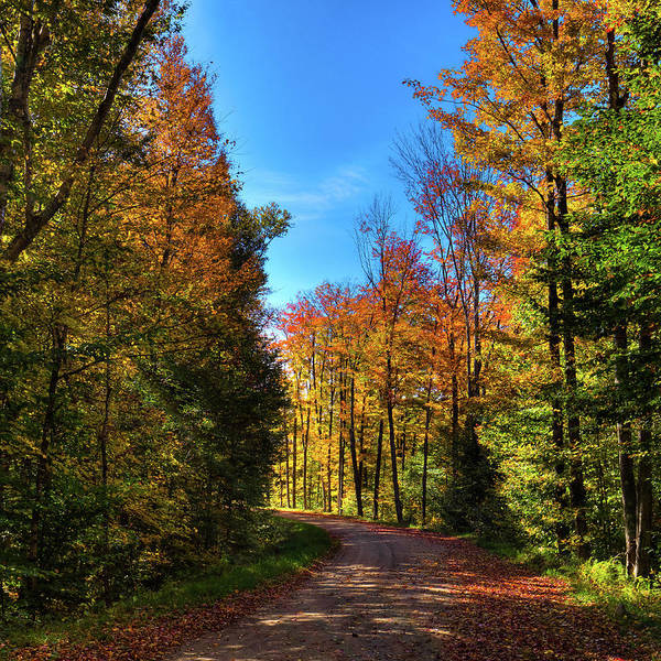 Photograph - Autumn Around The Corner by David Patterson