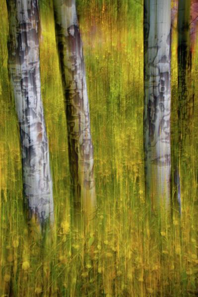 Photograph - Autumn Aspen Recollections by John De Bord