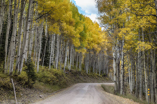 Photograph - Autumn Aspen Tree Lined Rocky Mountain Road by James BO Insogna