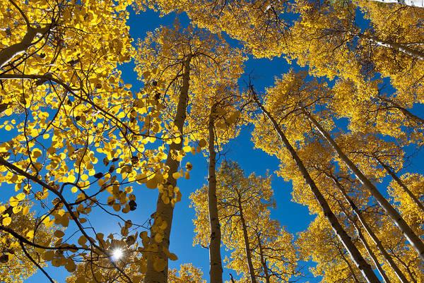Photograph - Autumn Aspen With Sunburst by Cascade Colors